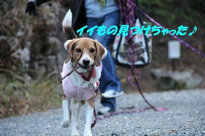 IMG_0965_sh01.jpg