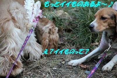 IMG_0986_sh01.jpg