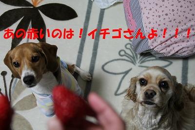 IMG_3816_sh01.jpg