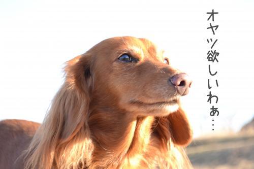 DSC_1213_convert_20120214182519.jpg