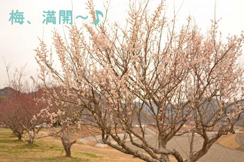 DSC_1458_convert_20120305145423.jpg