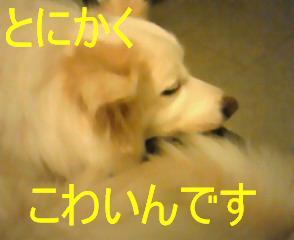 NEC_0264.jpg
