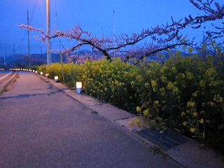 木になる市場 in 桃の花まつり