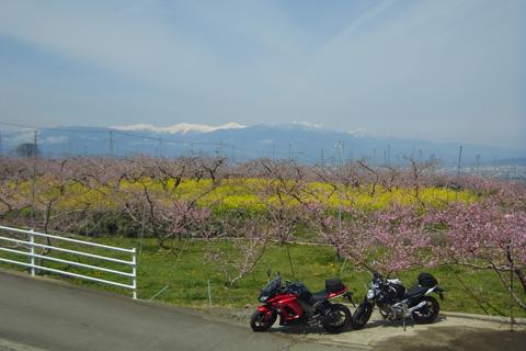 桃の花ツー0415-5