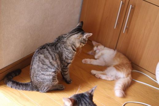 保護猫仲間