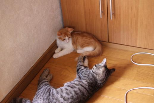 保護猫どうし