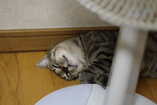 かえで寝顔1