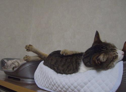 変な寝方?