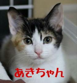 あきちゃん1