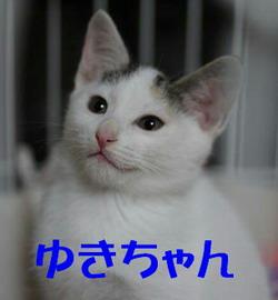 ゆきちゃん2