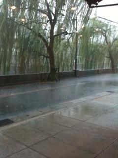 突然のゲリラ豪雨!4日連続で。