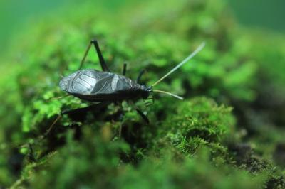 虫の音色も「セミ」から「スズ虫」へ