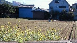 201009260839001.jpg