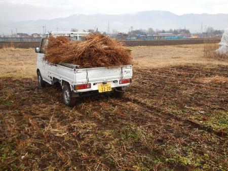 スペルト麦の播種 (2)
