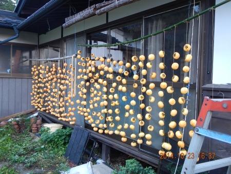 干し柿作り (5)