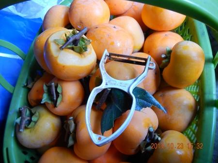 干し柿作り (4)