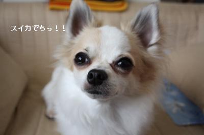 IMG_0832・2 コピー