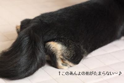 IMG_0846・2 コピー