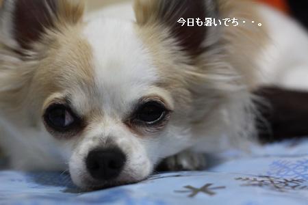 IMG_0856・2 コピー