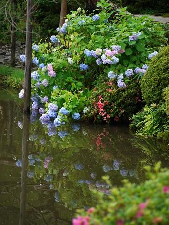 22平安神宮25東神苑-紫陽花