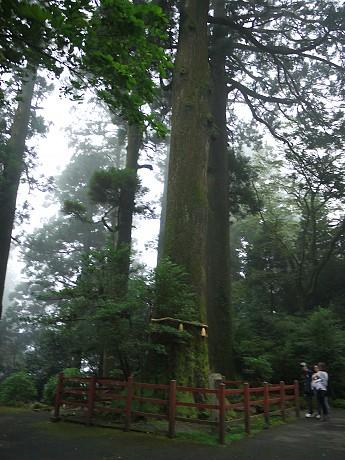 04神社01矢立杉