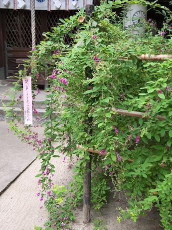 09梨木神社06本殿