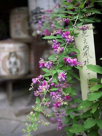 12梨木神社08本殿