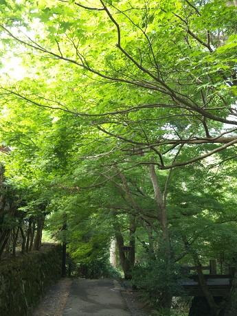 09参道-楓-宝泉院