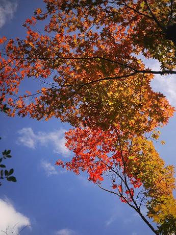 13高桐院15紅葉3