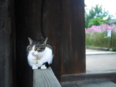 14般若寺13猫