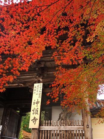 13神護寺参道08