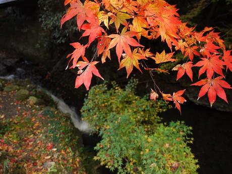 05参道04落合の滝