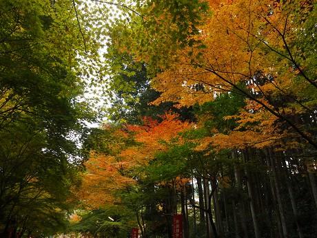 醍醐寺06