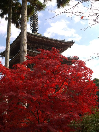 醍醐寺10