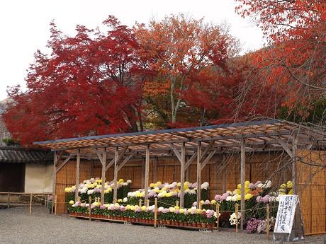 醍醐寺22三宝院