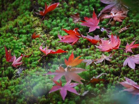 09散り紅葉
