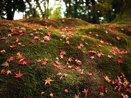 24苔散り紅葉
