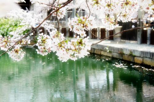 2011-04-11_0668.jpg
