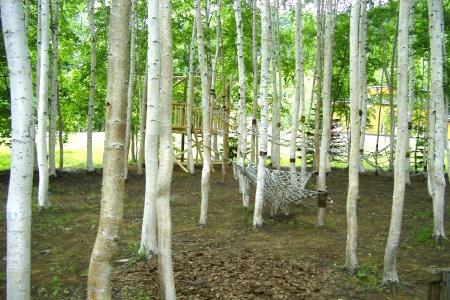 アスレチック公園の白樺林