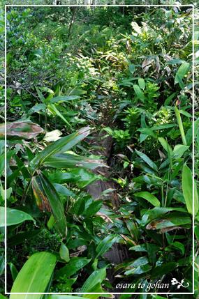 渡し板と笹の葉