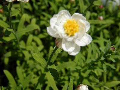 庭の花 002