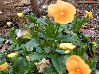 庭の花 005