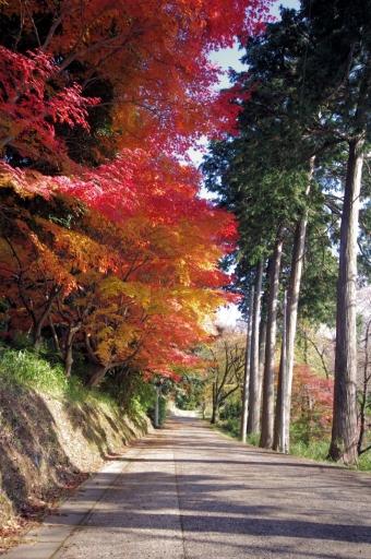 来坂神社近くの紅葉