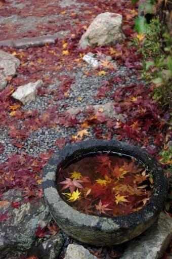 常栄寺庭園の手水