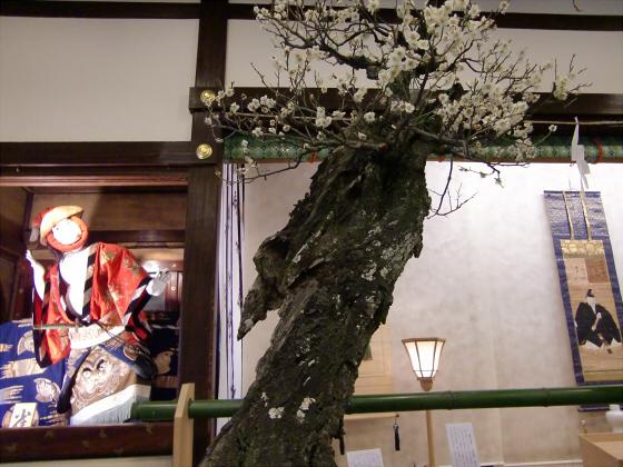 大阪天満宮の盆梅展06