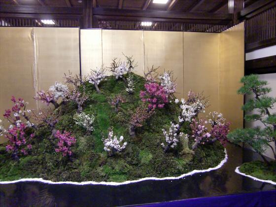 大阪天満宮の盆梅展10