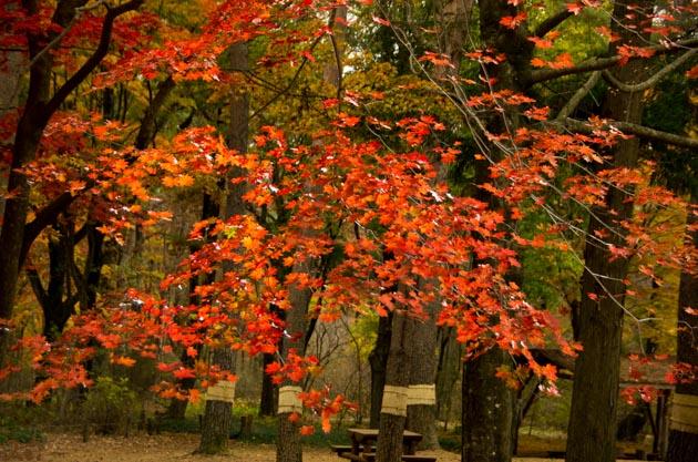 20141108赤城自然園11