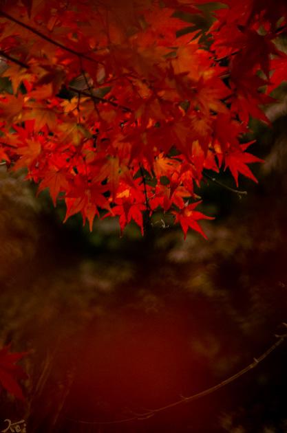 20141108赤城自然園06