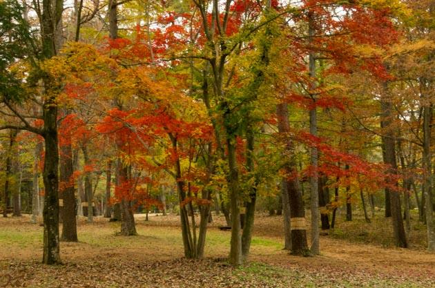 20141108赤城自然園09