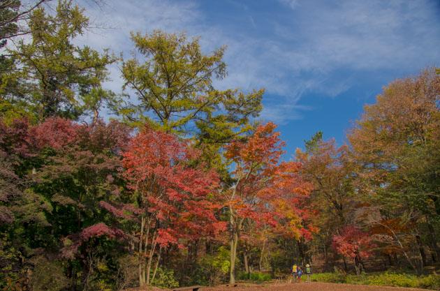 20141108赤城自然園02